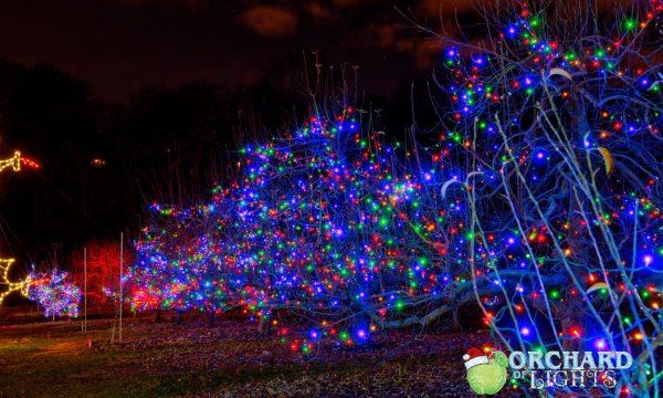 lights bushes